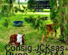 Consignataria Juan C. Kesqui Ruca 21610