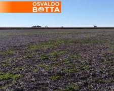 36 Hectáreas Agrícolas en Salto