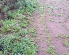 Campo de Cria Puelches (LA Pampa) 2.677 Has (alq o Venta)