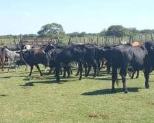Campo al Norte de Santa FE, Pozo Borrado, Villa Minetti