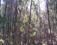 Vendo Rollizos Eucaliptus Blanco Para Leña