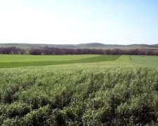 Harinas - Espelta, Trigo, Centeno