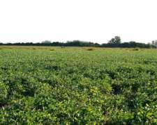 Campo Mixto en Calchaqui (santa FE)