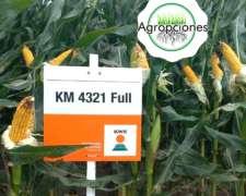 Semilla de Maiz KM4321 Full - Semillero KWS