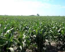 800 Hectareas Agricolas con Mejoras