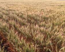 Vendo 500 Has 100 % Agrícolas en Córdoba Argentina