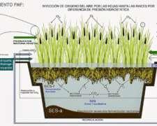 Humedales - Tratamiento de Agua con Plantas Acuáticas