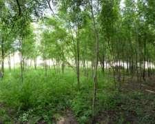 Terrenos En Anisacate - Córdoba De 25x50 - Con Escritura