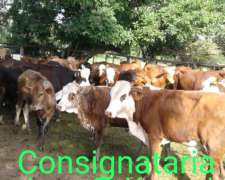 Consignataria JCK SAS Ruca 37244