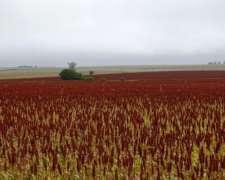 Er0299 165 Has Agricolas Tala Entre Rios