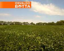 1800 Has. Winifreda la Pampa