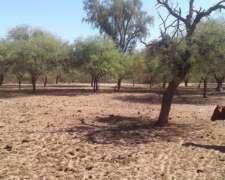 Campo Ganadero, Dpto. Pocho Cba.