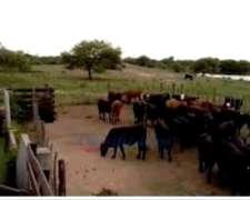 Campo Agrícola Ganadero Imperdible
