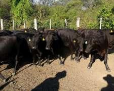 20 Vacas Gordas 420-430 Kg