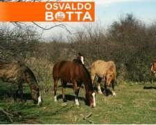 240 Hectáreas en Bernasconi, la Pampa