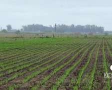 Campo Agricola en Pergamino
