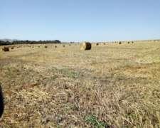 Busco Campo para Siembra para Hacer Rollos