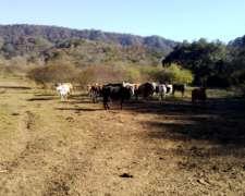 Finca en Venta - Jujuy - la Mendieta