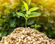 Producción de Energía con Biomasa - Agve