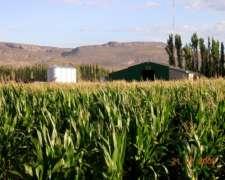 Excepcional Feed LOT en Neuquén 18 Ha
