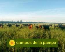 La Pampa - Venta Campo 350 Ha Bosque de Calden y Cultivo