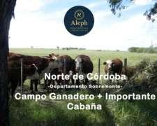 Campo Ganadero + Importante Cabaña