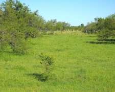 Entre Rios,gualeuaychu Vendo 232 Has. 30 Agricolas Ganadera