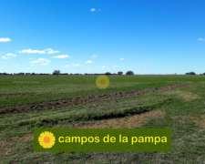 La Pampa - Venta 250 Ha Ataliva Roca - Decisión Inmediata