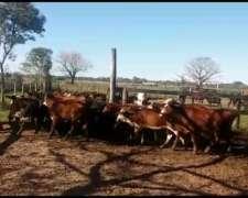 Doble Piso Terneros /AS 170 Kg