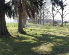 San Vicente Autovia 6, Campo Mixto 90 Has