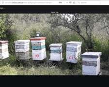 Sistemas de Monitoreo para Apicultura