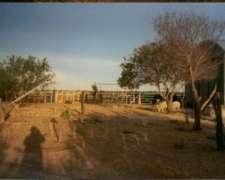 Venta de Campo Ganadero 5300 Has Adolfo Alsina , Río Negro