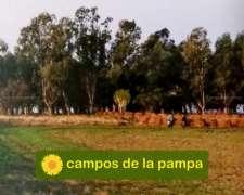 Buenos Aires - Venta 200 Ha Zona Huergo - Decisión Inmediata