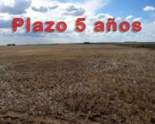 1.100 Has. Gascón, Pdo. de A. Alsina