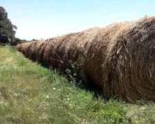 Vendo Rollos de Alfalfa Pura