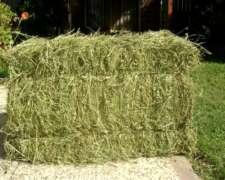 Fardos de Alfalfa Verdes Pura de Primera Calidad Corte 2019