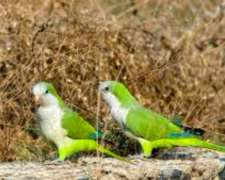 Insecticida (igr)pájaros,roedores,langostas, 25 Lts U$s 80