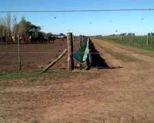 Comedero Para Hacienda Terneros Feedlot 0.65mt. X 25mts.