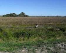 Campo Isla en Goya Corrientes