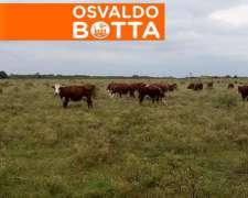 230 Has Campo Mixto, Gualeguaychú