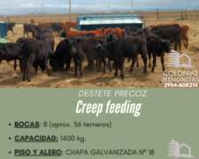 Creep Feeding para Destete Precoz- Colonias Menonitas