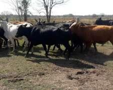 Jaula Doble Vacas Invernds Descarte
