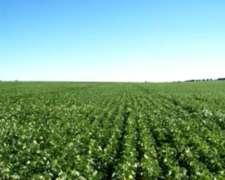Oportunidad 175 Hectáreas 100% Agrícolas Monte Maiz