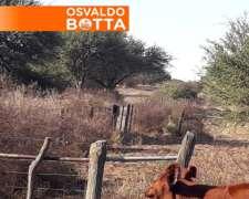 740 Has en Bernasconi, la Pampa