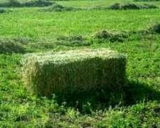 Fardos De Alfalfa De 1 Calidad