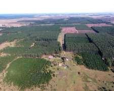 Er0315 Forestacion en Venta 1200 Has Concordia Entre Rios
