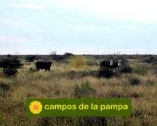 La Pampa - Venta 30000 Ha Dpto Curacó - Oportunidad, Financ.