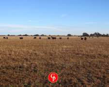 En Venta, 400 Has, Alpahiri - la Pampa -