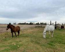 Campo en Venta en San Miguel del Monte 100 Has. Mixto.