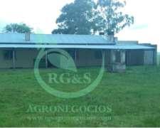 1500 Hectáreas Ganaderas Forestal - Uruguay